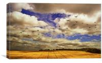 Flying over golden fields, Canvas Print