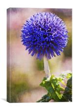 Purple Allium Flower, Canvas Print