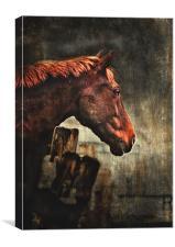 War Horse, Canvas Print