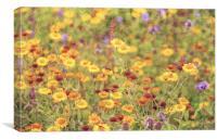 Field of sunshine, Canvas Print