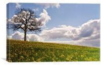 Lone tree in field of gold, Canvas Print
