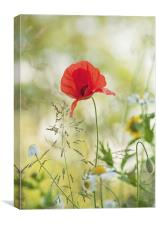 Late Summer meadow, Canvas Print