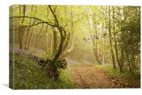 Walk through the Bluebell woods, Canvas Print