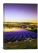 lines f lavender flowers, Canvas Print