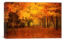 golden woodland, Canvas Print