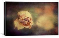 Faded Beauty, Canvas Print