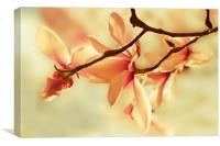 Spring Magnolia, Canvas Print