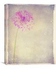 Faded Beauty, Canvas Print
