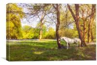 White Horse in  kent meadow, Canvas Print