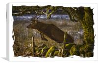 Red Deer goes for a leap, Canvas Print