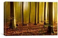 Autumn fall beech woods, Canvas Print