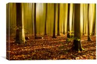 Autumn fall beech woods (2), Canvas Print