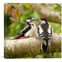 Woodpecker feeding time, Canvas Print