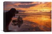 Dogs on the beach at sunset, Canvas Print