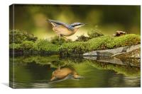 Nuthatch reflecting