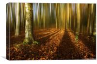 Autumn beech blur