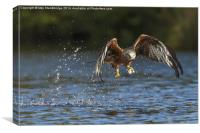 Red kite with water splash, Canvas Print