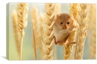 Harvest mouse in wheat stalks, Canvas Print