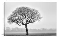 one tree, Canvas Print