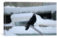 Bird on a Wire, Canvas Print