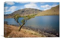 Lonely tree in Wastwater