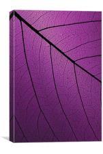 Veins Of Leaf Purple, Canvas Print