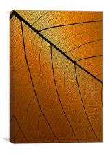 Veins Of Leaf Auburn, Canvas Print