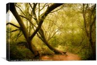 Occombe woods in spring, Canvas Print