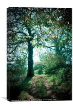 Horse Chestnut tree in Sunlight & Shadow, Canvas Print