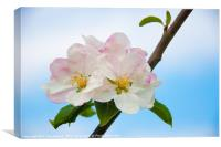 Apple Blossom in Summertime., Canvas Print