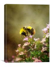 Bee on Thyme flowers Vintage Finish, Canvas Print
