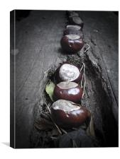 Horse chestnut seeds, Conkers,, Canvas Print