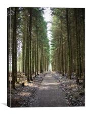Haldon Forest, The famly trail....., Canvas Print
