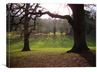 Cockington Park Trees and shadows, Canvas Print