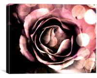 Pink Rose Abstract, Canvas Print