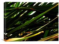 Palm Leaves Torre Abbey, Canvas Print