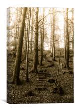 Believers Way, Haldon Woods, Canvas Print