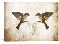 Common Sparrow Love, Canvas Print