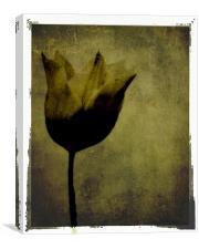 Black Tulip, Canvas Print
