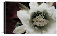 Cactus Flower, Canvas Print