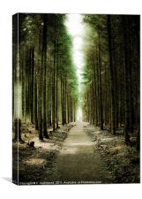 Haldon Forest, Through the Trees, Canvas Print