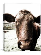 Moo Cow With big Sad eyes., Canvas Print