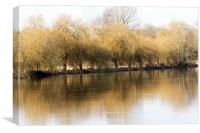 Willows by the Thames, Canvas Print