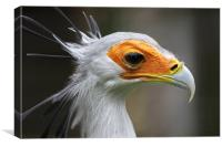 Secretary Bird, Canvas Print