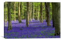 Bluebell Woodland, Canvas Print