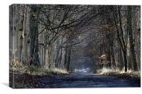 Forest Road, Canvas Print