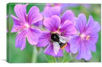 Bee on flowers, Canvas Print