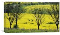 Yellow fields, Canvas Print