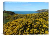 Yellow spring show by the sea                     , Canvas Print
