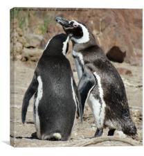 Penguin love                     , Canvas Print